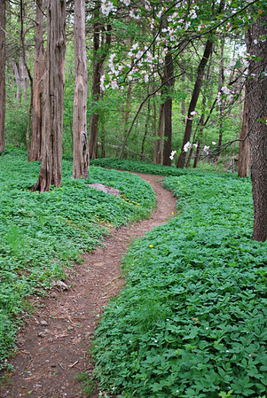 Woodland trail at Long Hill
