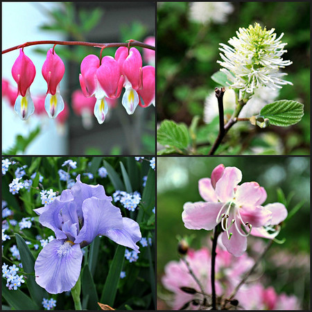 Collage of flowers at Long Hill