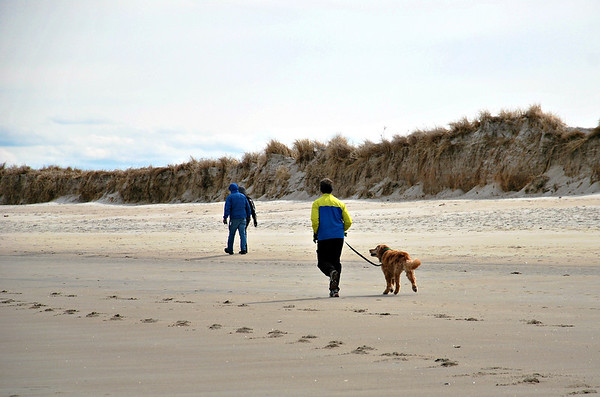 Dogs love Crane Beach